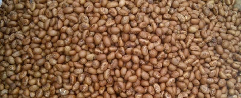 Supply Bitter kola/ Garcinia kola in large quantity