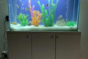 Standing Aquarium Tank