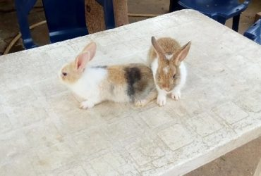 Rabbit,Rabbit Pallets And Poultry